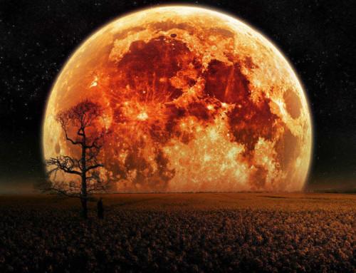 Naravni ritmi v mesecu aprilu skozi djotiš vpogled